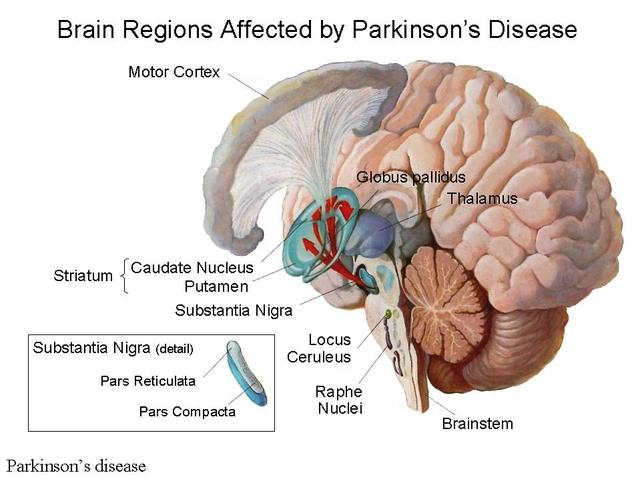 Parkinson S Disease Home